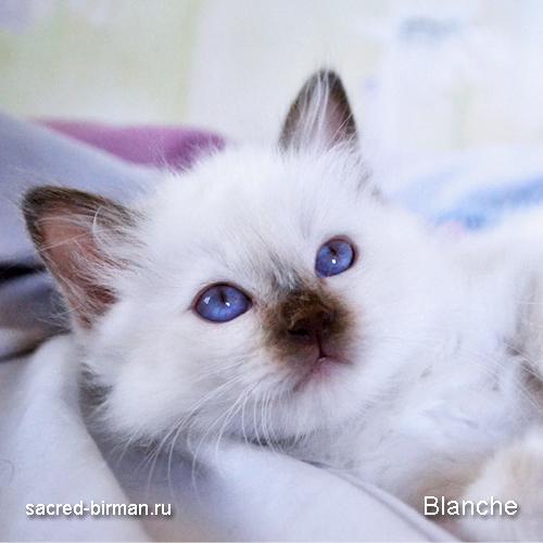 blanche2-jpg