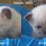 assole-3weeks-jpg