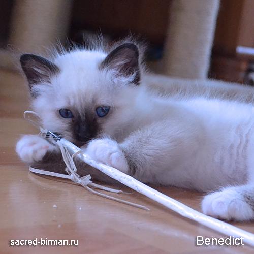 benedict3-jpg