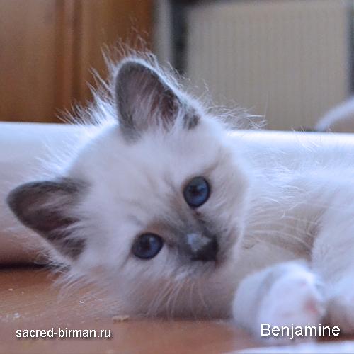 benjamine2-jpg