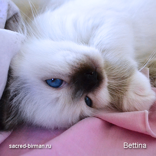 bettina2-jpg