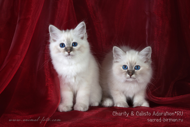 charity-calisto-jpg