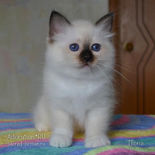 Illona