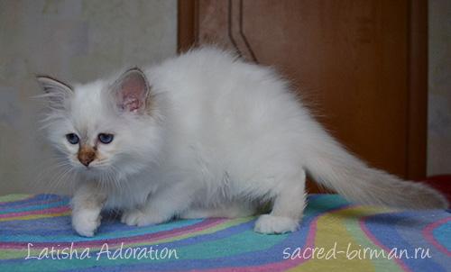 Latisha-2.5-months-2