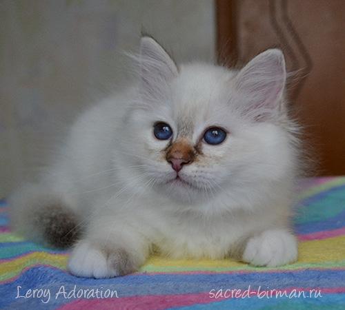 Leroy-2.5-months
