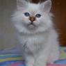 Latisha-2.5-months